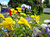 Colour In Our Garden.