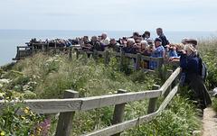 Birdwatchers Looking for the Albatross