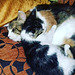 Whiskey snuggling into Pascha