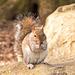 Squirrel 2 (5)