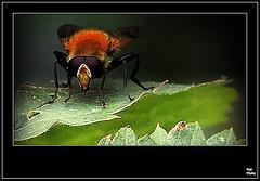 Insecticidémoi.... dans EXPLOREZ moi...