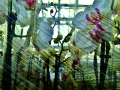 Orchids Wrapped And Stacked At The Garden Centre