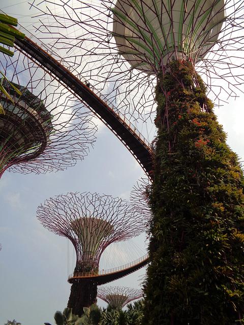 Vietnam 2016 Singapur / Super Trees