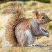 Squirrel 3 (1)