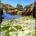 Rock pool for Pam. Very low tide.