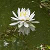 Water lily on Bluff Lake