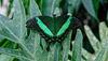 HUNAWIHR: Jardins des papillons 32