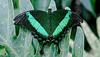 HUNAWIHR: Jardins des papillons 33