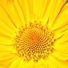 The Colour of Sunshine
