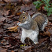 Squirrel at Eastham Woods.