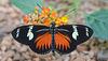 HUNAWIHR: Jardins des papillons 35