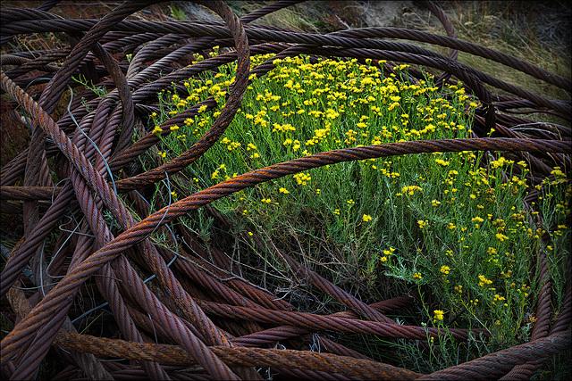 yellow_in_rusty_steel