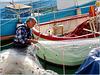 Genova : il pescatore pulisce e controlla con cura il suo tremaglio