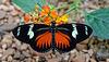 HUNAWIHR: Jardins des papillons 36