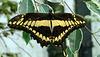 HUNAWIHR: Jardins des papillons 37