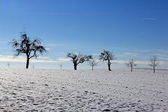 Winter in Oberschwaben  21.01.2016