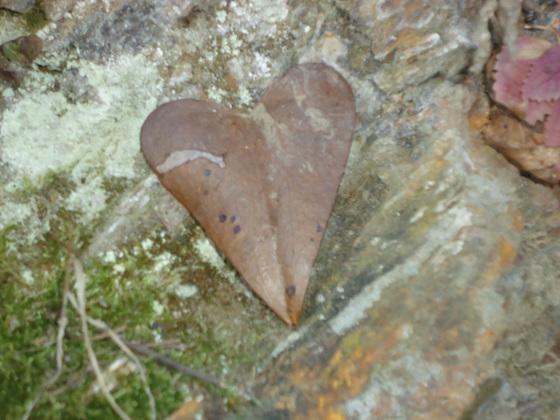 un cœur trouver dans la nature!!!!!
