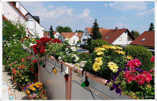 Mein Balkon im Hochsommer (Blickrichtung Nord-Ost)
