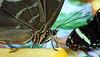 HUNAWIHR: Jardins des papillons 39