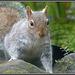 Squirrel attention