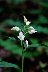 Eine Schönheit in Weiß - A beauty in white
