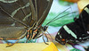 HUNAWIHR: Jardins des papillons 40