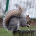 Squirrel balancing (1)