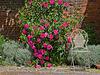 Havant's Secret Garden (2)
