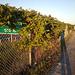 Clôture botanique / Fence with climbing plants