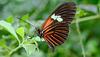 HUNAWIHR: Jardins des papillons 42