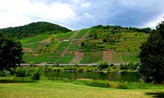 DE - Bruttig-Fankel - Blick auf Mosel und Weinberge