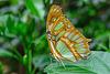 HUNAWIHR: Jardins des papillons 43