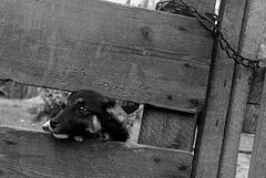 fate of dog ( pieskie życie )