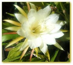 Ouvrez votre coeur comme cette fleur,