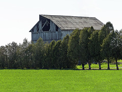Day 2, an old barn near Rondeau PP, Ontario