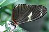 HUNAWIHR: Jardins des papillons 44