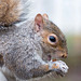Squirrel close up (1)