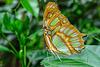 HUNAWIHR: Jardins des papillons 45