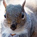 Squirrel close up (2)
