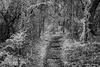 Fairyland Trail