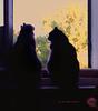 cats ... like the moon