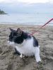 chat,eau,sable