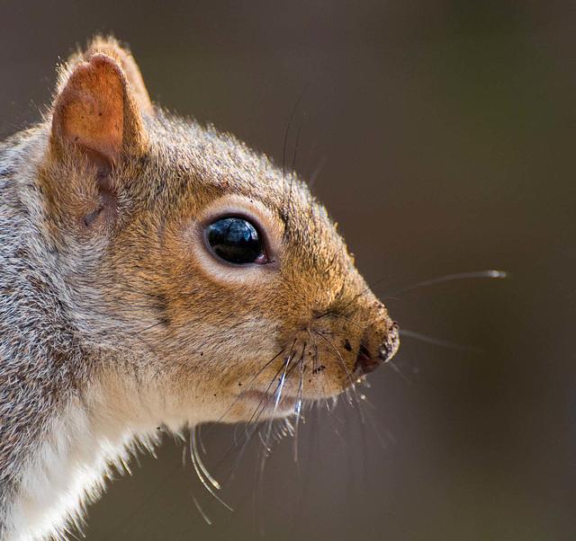 Squirrel close up (3)