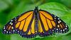 HUNAWIHR: Jardins des papillons 47