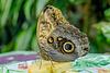 HUNAWIHR: Jardins des papillons 48