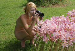 Naked lady photographing naked lady lilies