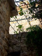 Budva lemon tree