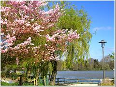 Merveilles du printemps