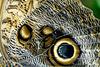 HUNAWIHR: Jardins des papillons 50