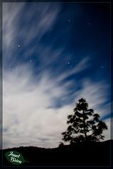 6/366: Pine Tree Against Dramatic Sky